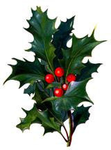 Free Vintage Christmas Holly Image To Download