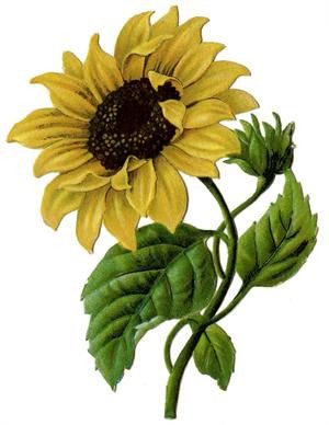 Free Vintage Sunflower Graphic Image to Download - Photo Jewelry Making