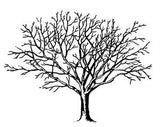 Free Vintage Tree Graphic to Download - Photo Jewelry Making