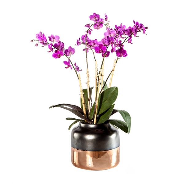 Multiple Orchid Planter