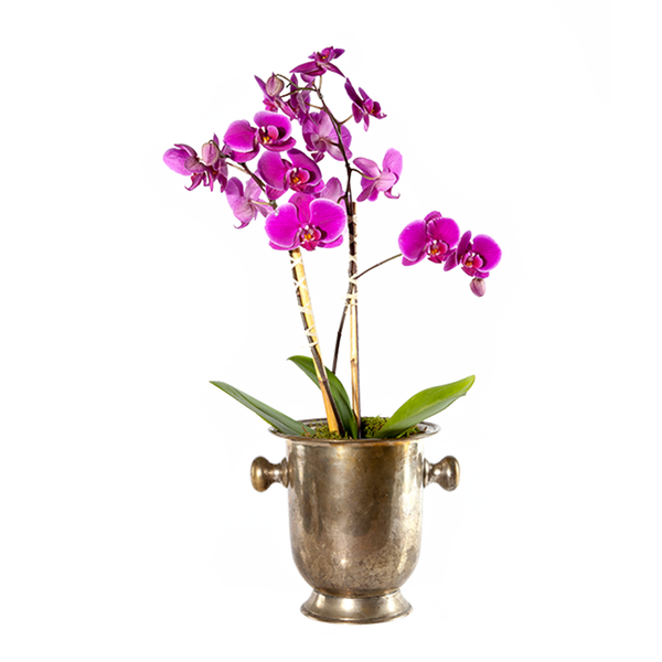 Single Orchid Planter