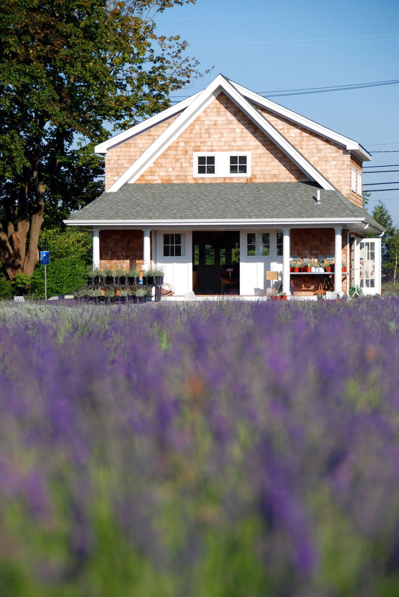 Long Island New York Farm Local Products Lavender By