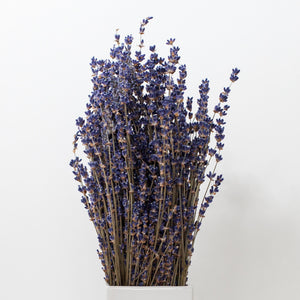 Dried English Lavender Bunches - Set of 2 - Lavender By The Bay