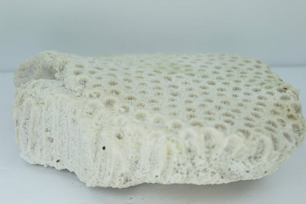 "Natural Star Coral 8"" Brick Shape 1960s Estate Collection Aquarium Shell Art Collectibles"