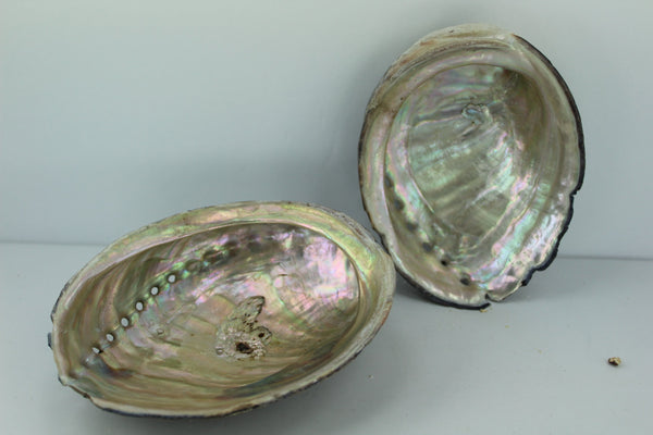 "Black Abalone Shells 2 Vintage Rainbow Iridescent  5 1/4""  5"" Estate Collection Shell Art Collectibles"