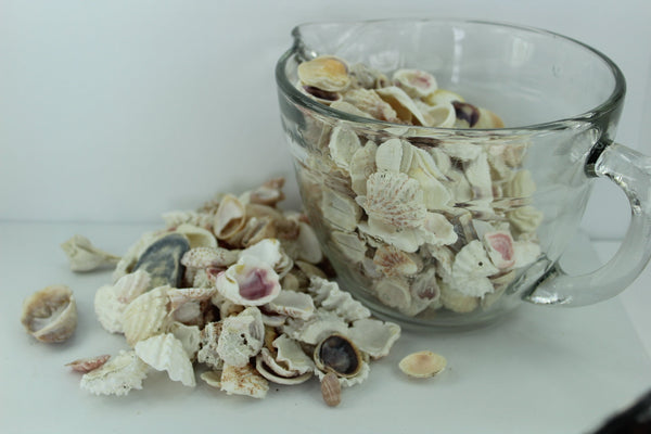 Florida Natural Shells Variety Small Bulk 4 Cups Wedding Jewelry Shell Art