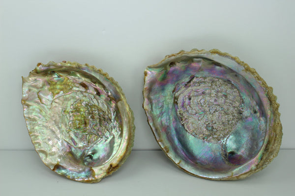 "Green Abalone Shells 2 Vintage Rainbow Iridescent  5 1/2"" 4 3/4"" Estate Collection Shell Art Collectibles"