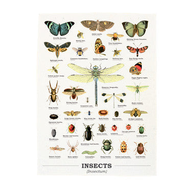insect biology tea towel