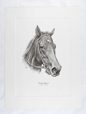 Vintage 1975 Tunell Foolish Pleasure Kentucky Derby Winner Talio Chrome Print