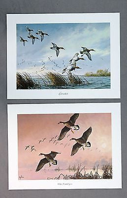 Vintage David Maass Canvasbacks and White Fronted Geese Two Print Set