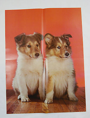Vintage 1970's Walter Chandoha Collies Collie Puppies Poster
