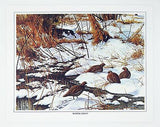 Vintage David Maass Wilderness Wings Canvas Print Portfolio 242-140 4 Print Set