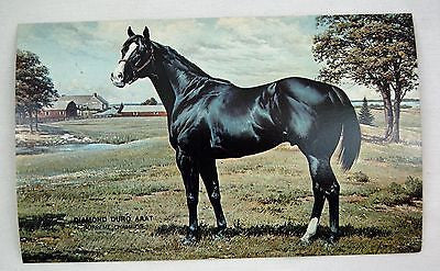 Vintage 1970's Diamond Duro Supreme Champion Quarter Horse Postcard