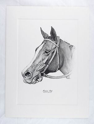 Vintage 1980 Jack Tunell Genuine Risk Kentucky Derby Winner Talio Chrome Print