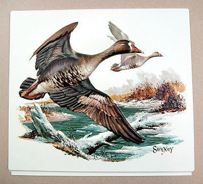 Vintage Fred Sweney Specklebelly White Fronted Goose Vacuum Form Print