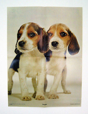 Vintage 1970's Walter Chandoha Beagles Puppies Poster