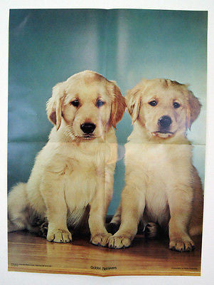 Vintage 1970's Walter Chandoha Golden Retrievers Puppies Poster