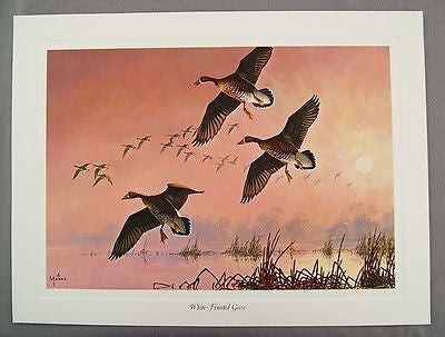 Vintage 1980's David Maass White Fronted Geese Wilderness Wings Series Print