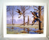 Vintage 1980's David Maass Wilderness Wings Print Portfolio 247