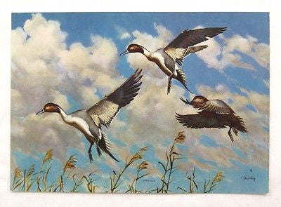 Vintage 1960's Richard E. Bishop Pintails Wildfowl Print