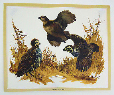 Vintage 1970's Fred Sweney Mearn's Quail Print