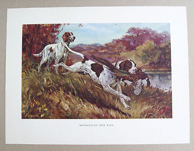 Vintage 1970's Stanford Fenelle Retrieving The Kill Hunting Dogs Print