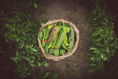 Photography: Hatch Green Chile - Organ Mountain Outfitters