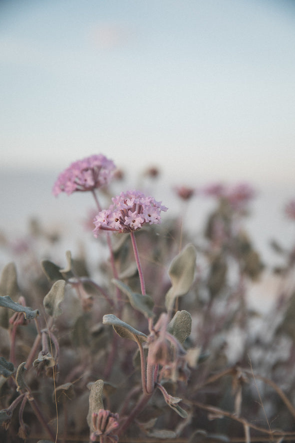 Photography: Wildflowers at White Sands