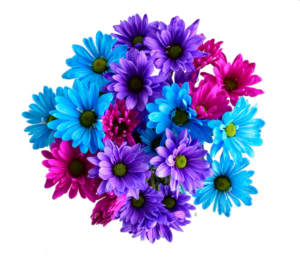 Easter flowers, daisies, beautiful flowers, wholesale prices, wholesale flowers