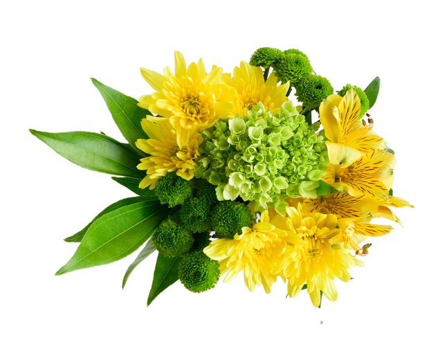St patrick´s day, celbration saint patrick´s, best flower, fresh cut flowers, wholesale prices