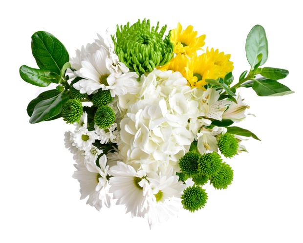 Saint patrick´s day flowers, fresh cut flowers, beautiful flowers wholesale prices, st patrick´s day