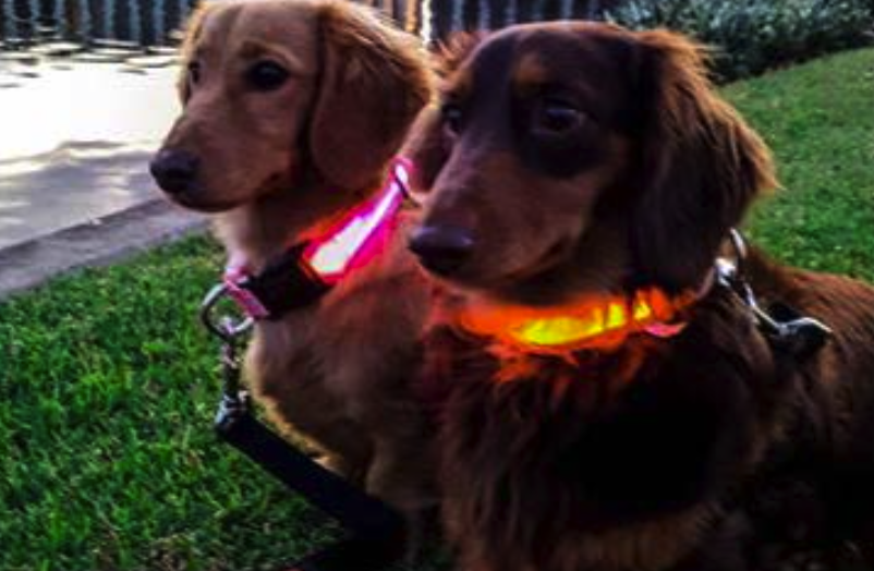 Pet Booty DE LUX LED Pet Safety Collar