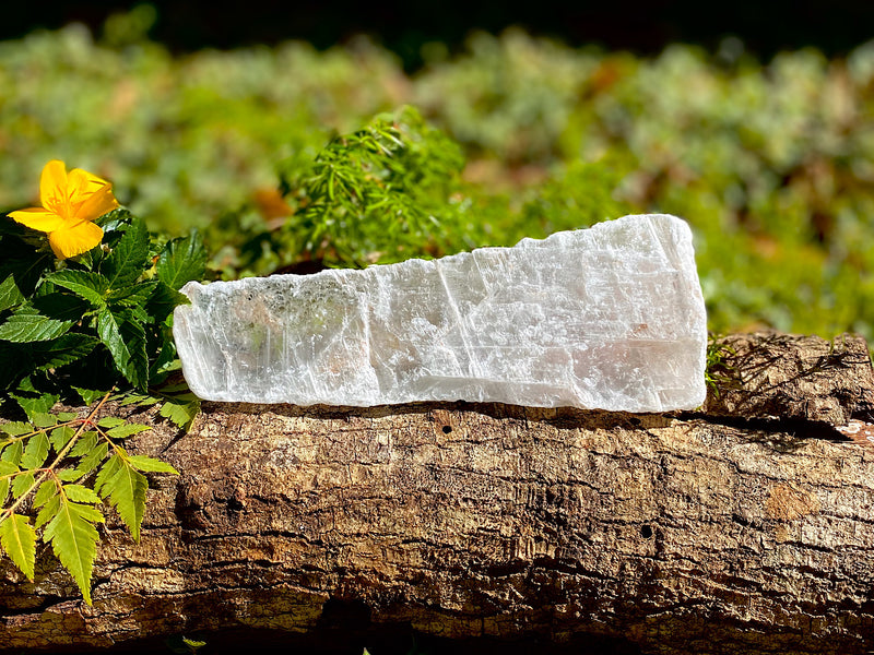 Angel Wing Selenite crystal