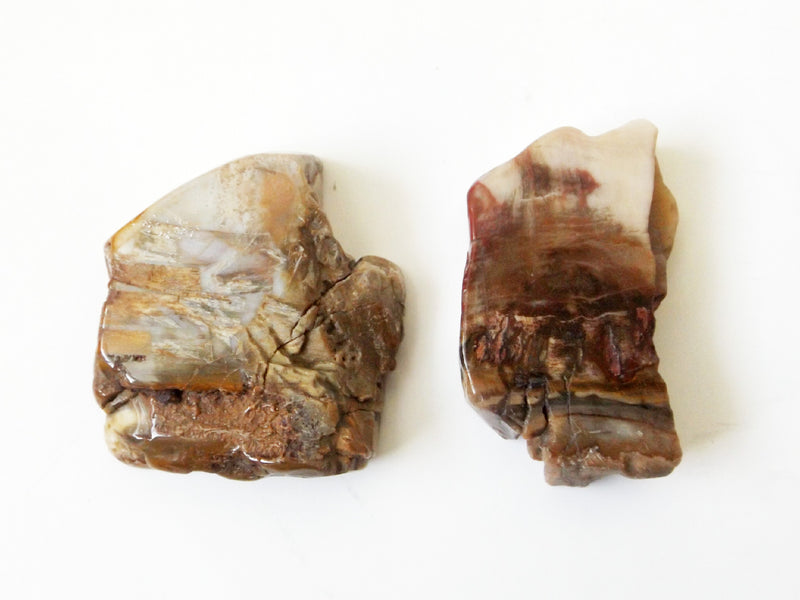 Petrified Wood Set - 2pcs