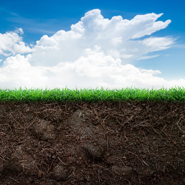 The Secret of Soil Science for Healthy Lawns & Gardens