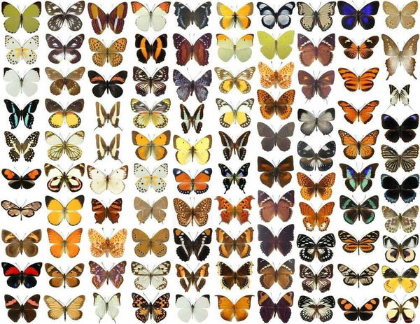 The Importance Of Butterflies In Our Ecosystem