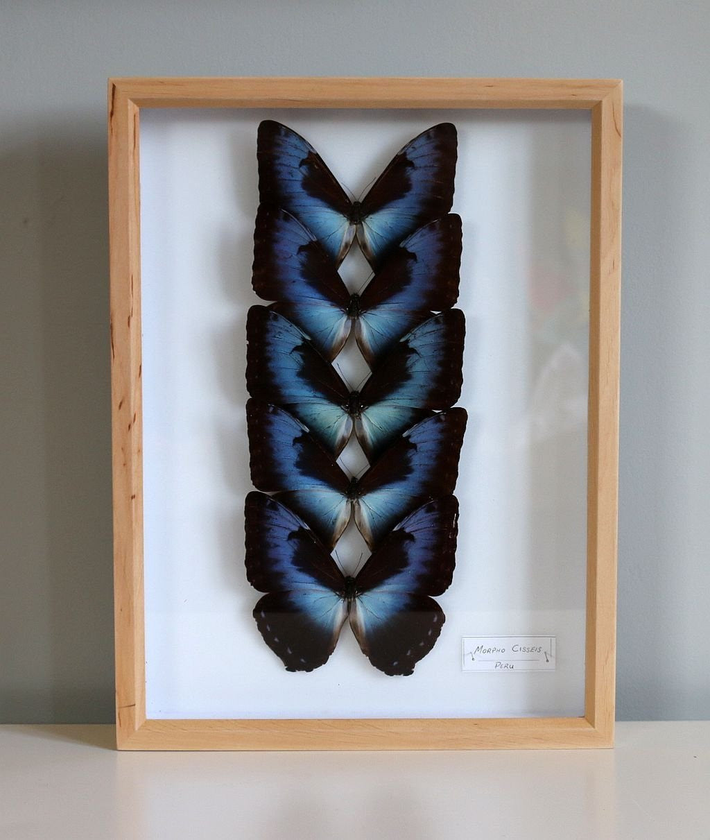 How To Display Framed Butterflies and Moths At Home