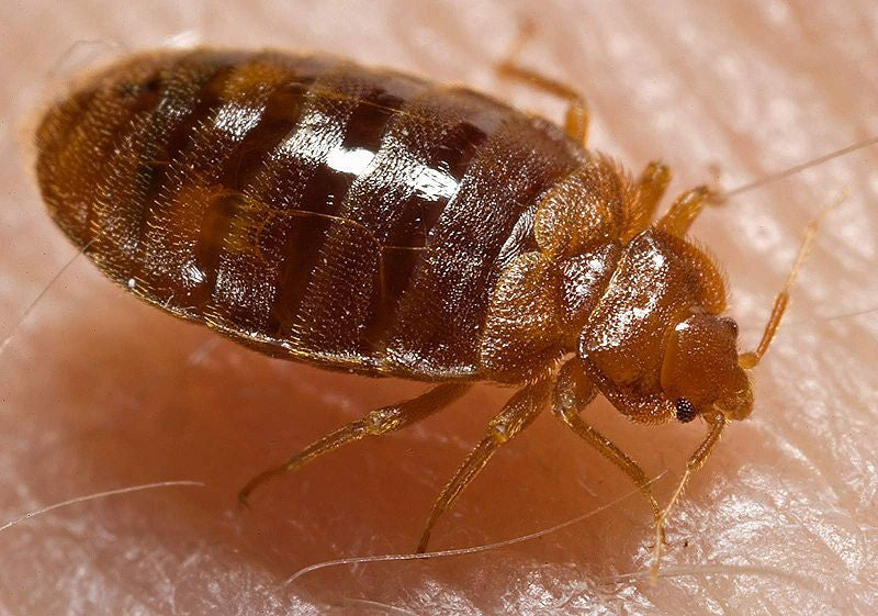 Don't Let The Bed Bugs Bite!