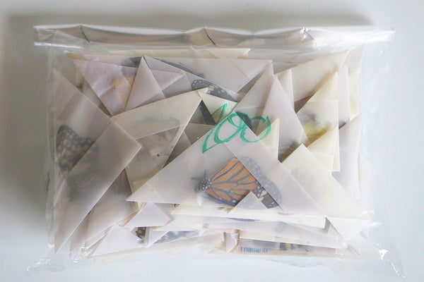 UNMOUNTED BUTTERFLIES WHOLESALE PACK