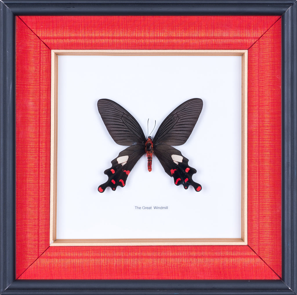 Exotic Framed Butterfly - Mulberry Silk Lining | THE GREAT WINDMILL