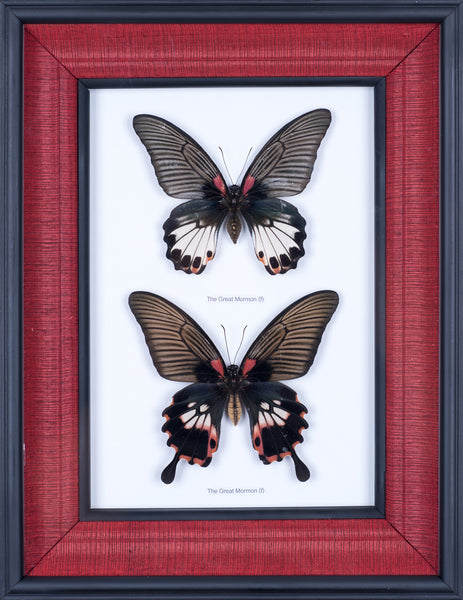 Silk Lined Natural Butterfly Collection #402
