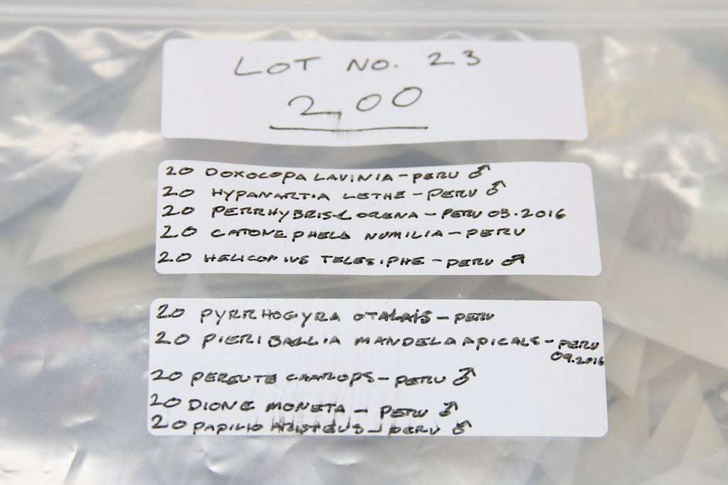 A large collection of 200 dry-preserved unmounted tropical butterflies (#23)