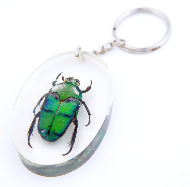 MINI BEAST INSECT KEY CHAINS - ASSORTED PACK OF 3