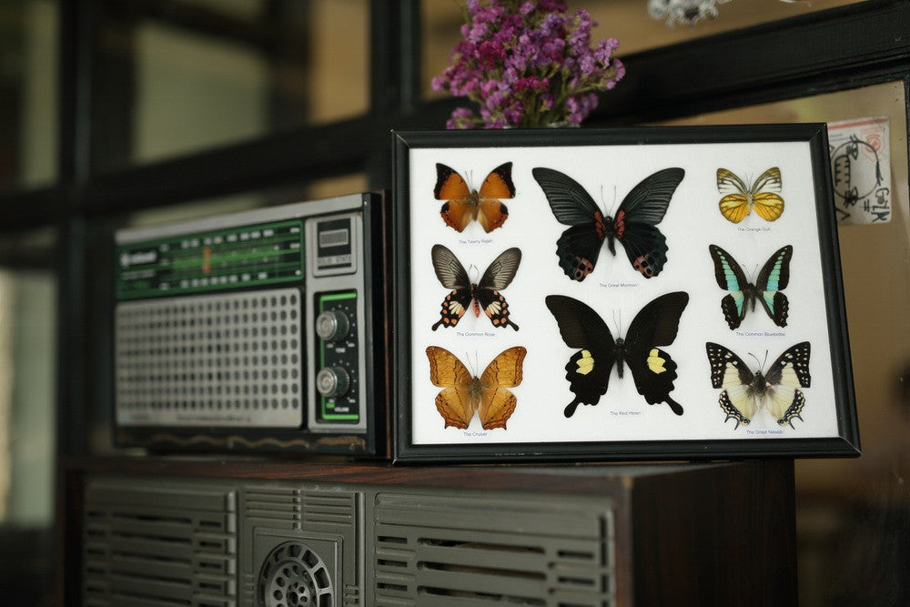 EIGHT TAXIDERMY BUTTERFLIES, FRAMED ASSORTED BUTTERFLIES