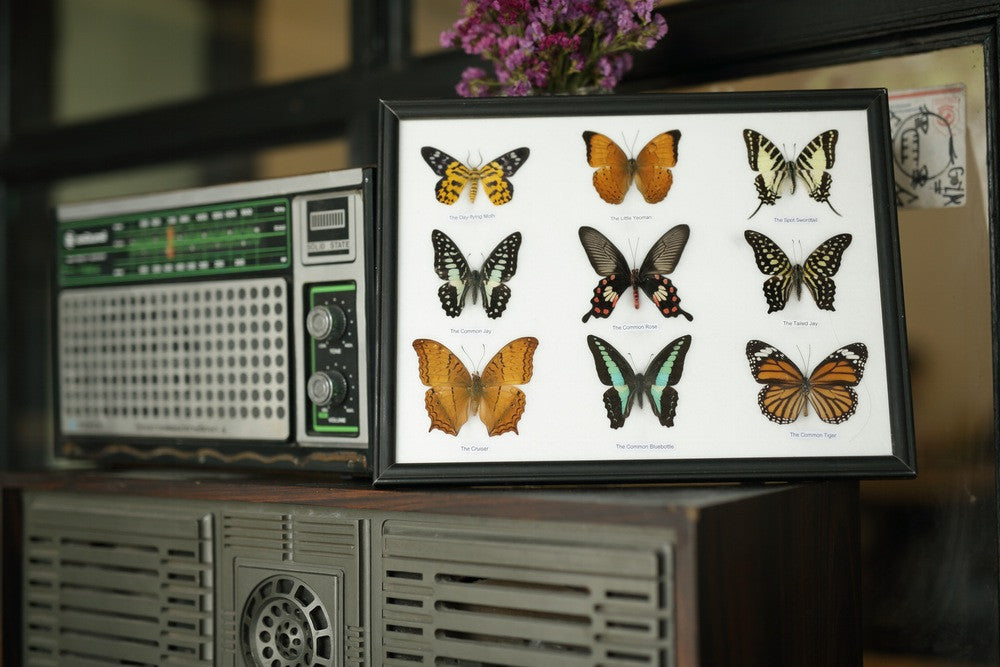 NINE TAXIDERMY BUTTERFLIES, FRAMED ASSORTED BUTTERFLIES