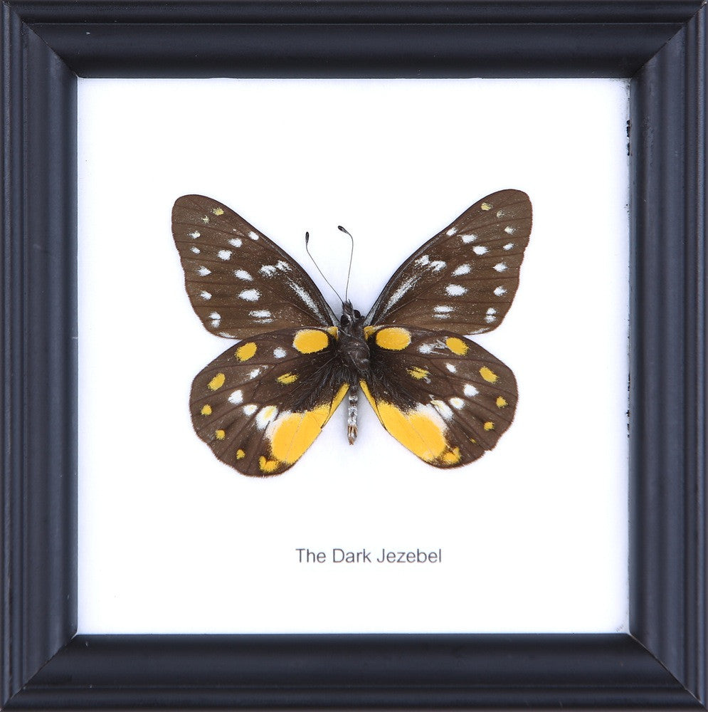 Real Butterfly Pictures Frames, Pack of 3 butterflies Natural ...