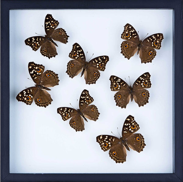 tropical framed butterfly display setg23 double glass