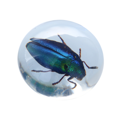 METALLIC JEWEL BEETLE RESIN PAPERWEIGHT
