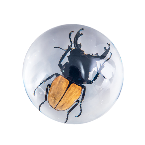 ORANGE STAG BEETLE RESIN PAPERWEIGHT