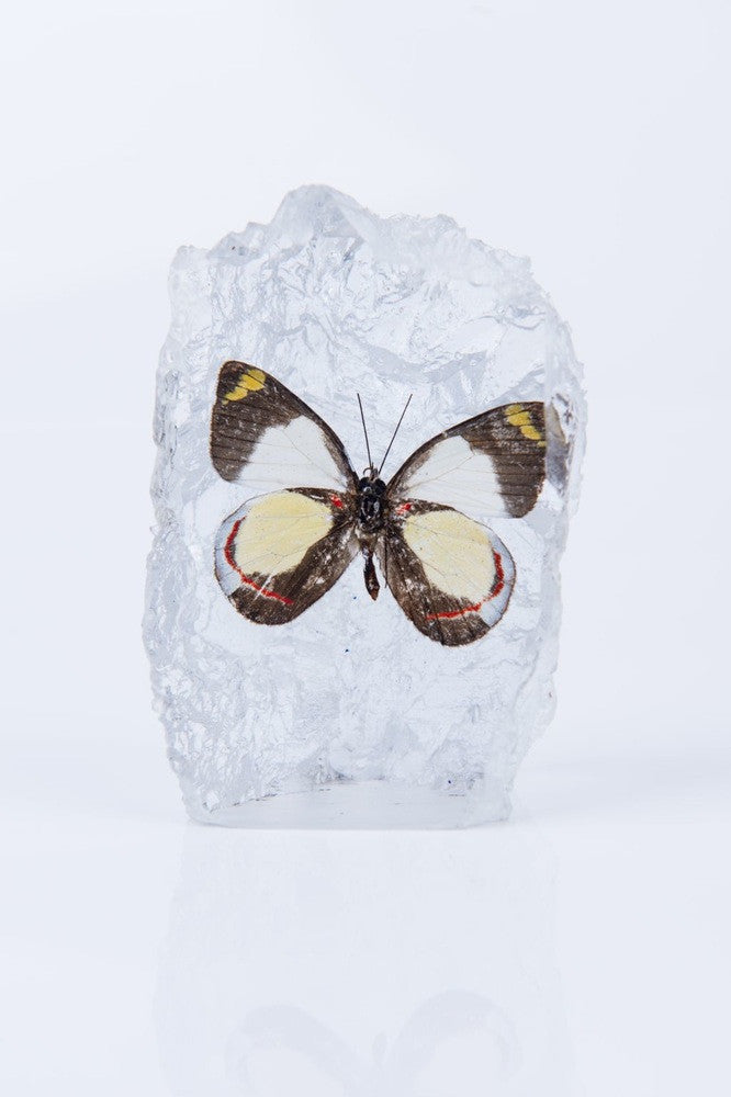 DELIAS BUTTERFLY PAPERWEIGHT